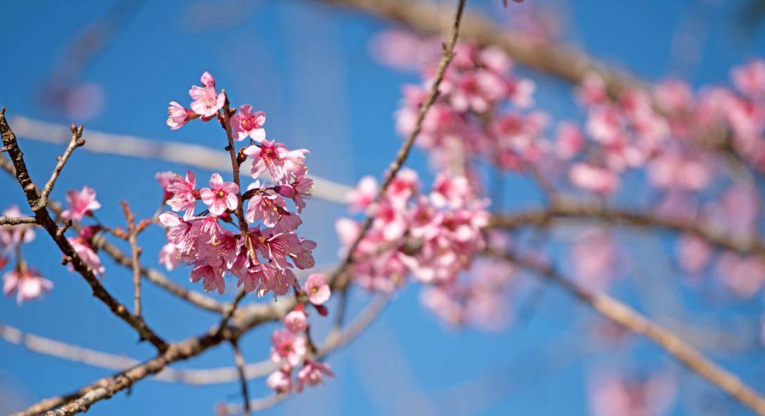 ¿Qué es Ikigai? Así trabajan los japoneses
